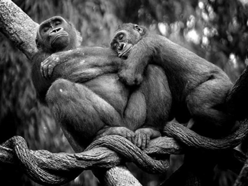 Amor y animales Foto 2