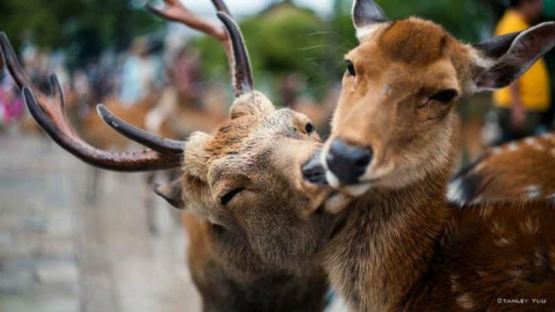 Amor y animales Foto 4