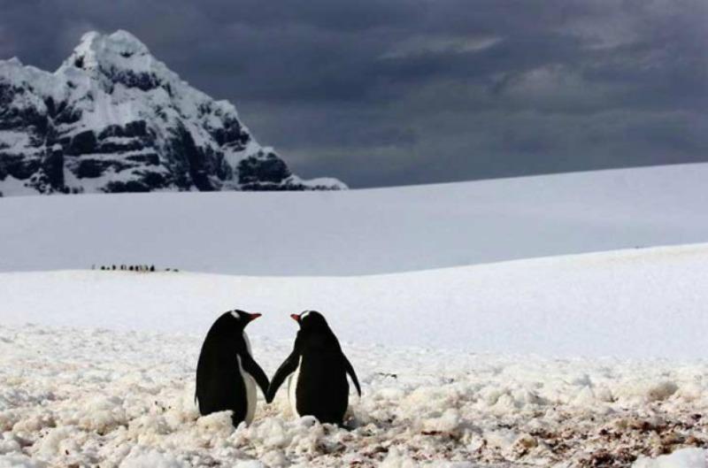 Amor y animales Foto 6