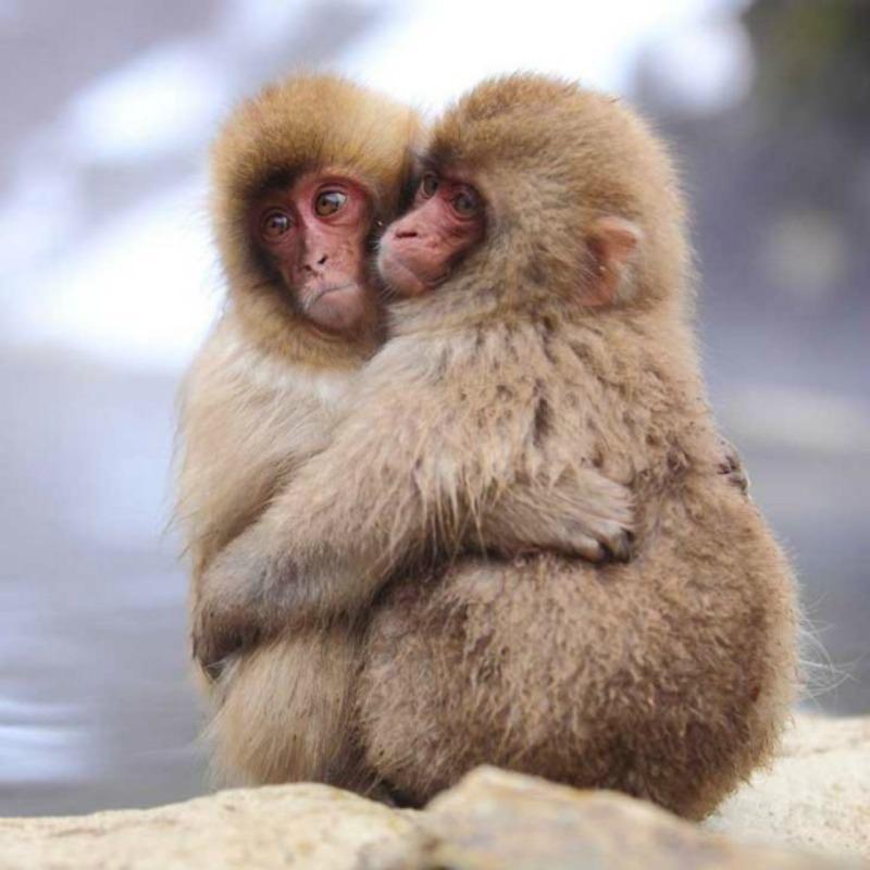 Amor y animales Foto 7