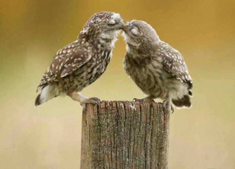 Amor y animales Foto 9