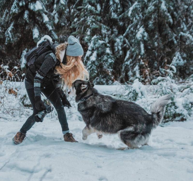 Perro rescatado foto 5