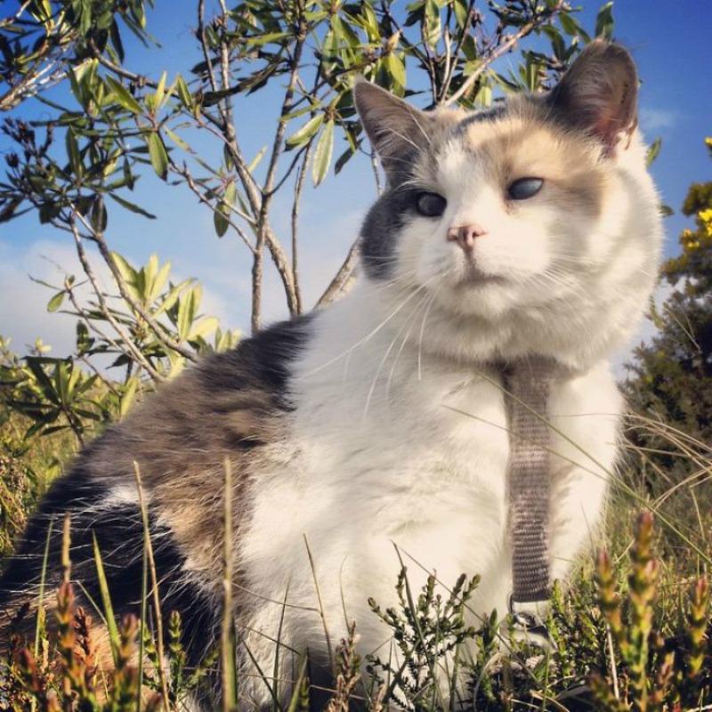 Gato ciego explorador foto 1