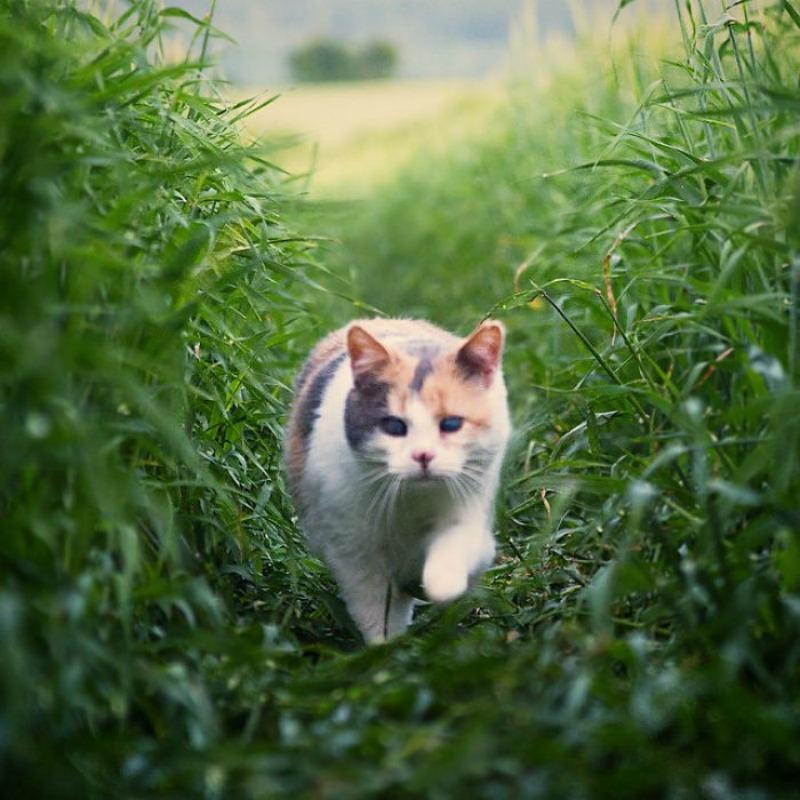 Gato ciego explorador foto 2