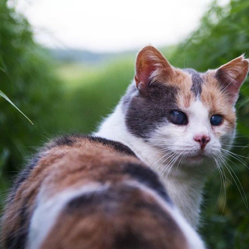 Gato ciego explorador foto 3