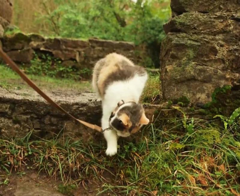 Gato ciego explorador foto 5