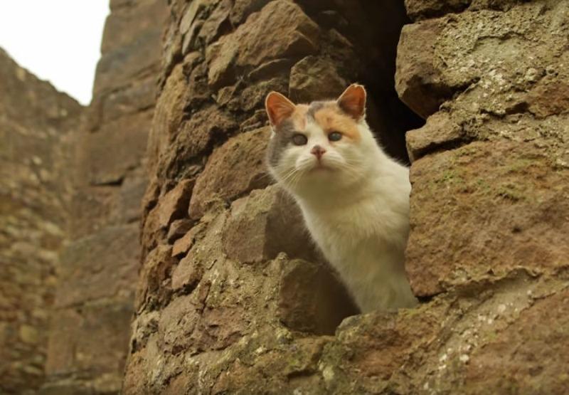 Gato ciego explorador foto 6