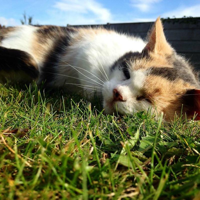 Gato ciego explorador foto 7