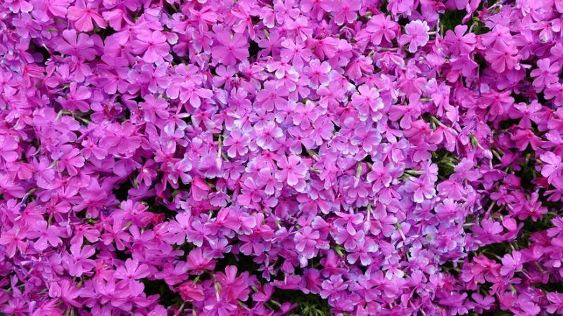 Marido y campo de flores foto 3