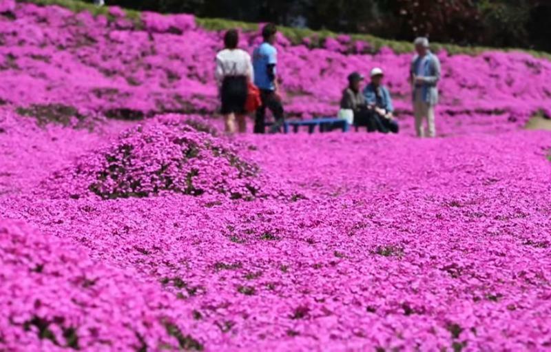 Marido y campo de flores foto 6