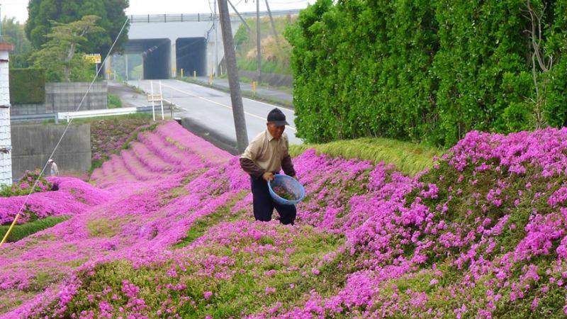 Marido y campo de flores foto 7