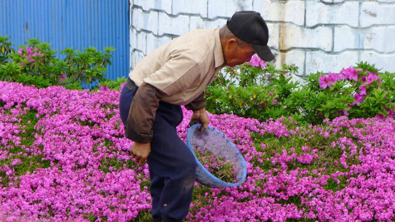 Marido y campo de flores foto 8