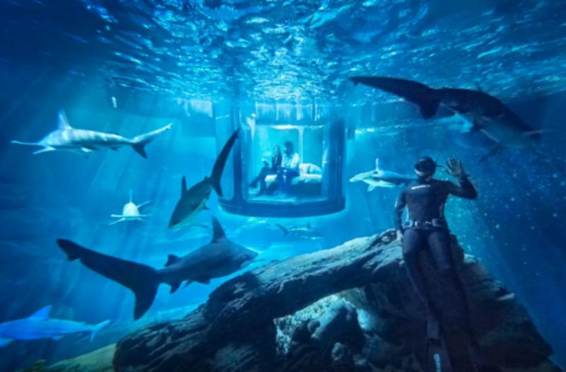 Cama en tanque de tiburones foto 1