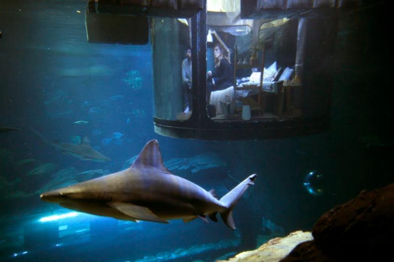 Cama en tanque de tiburones foto 2