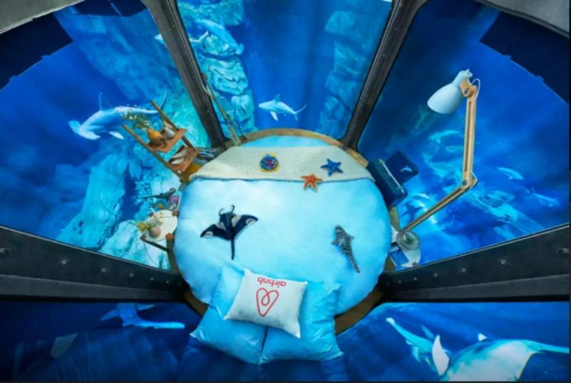 Cama en tanque de tiburones foto 4
