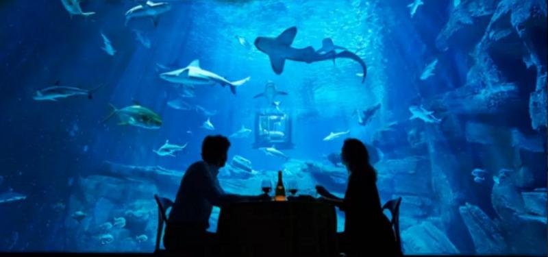 Cama en tanque de tiburones foto 6