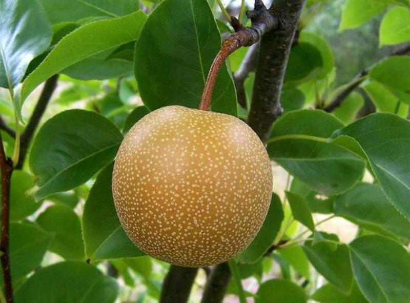 Fruta para la resaca foto 2