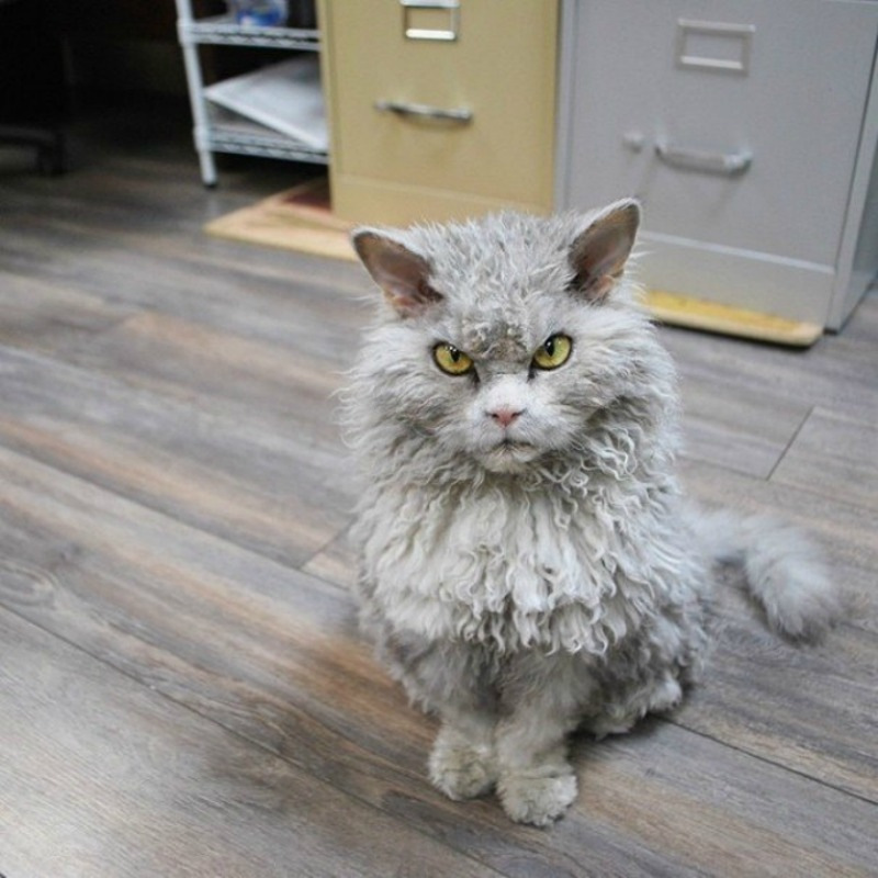 Gato con mirada fiera foto 1