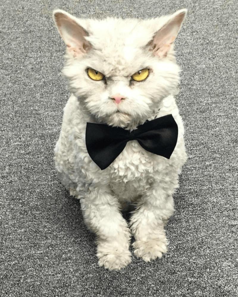Gato con mirada fiera foto 2