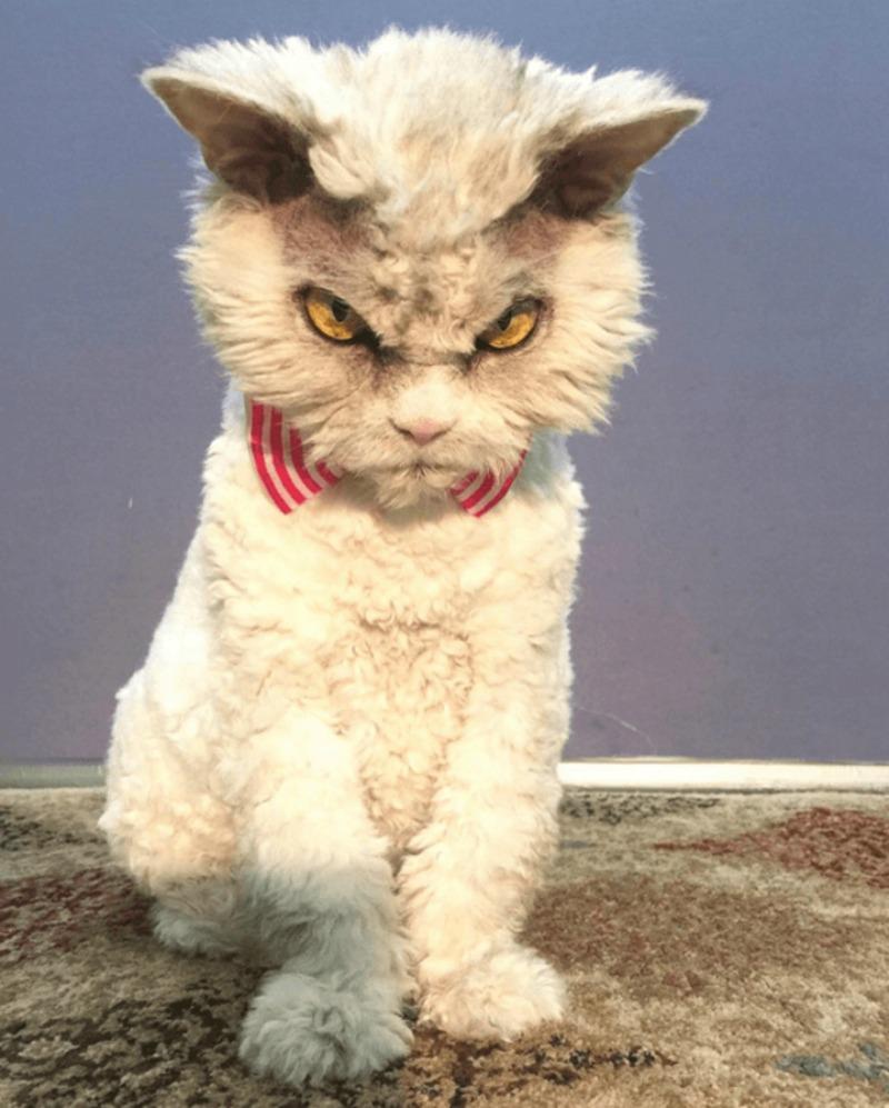Gato con mirada fiera foto 3