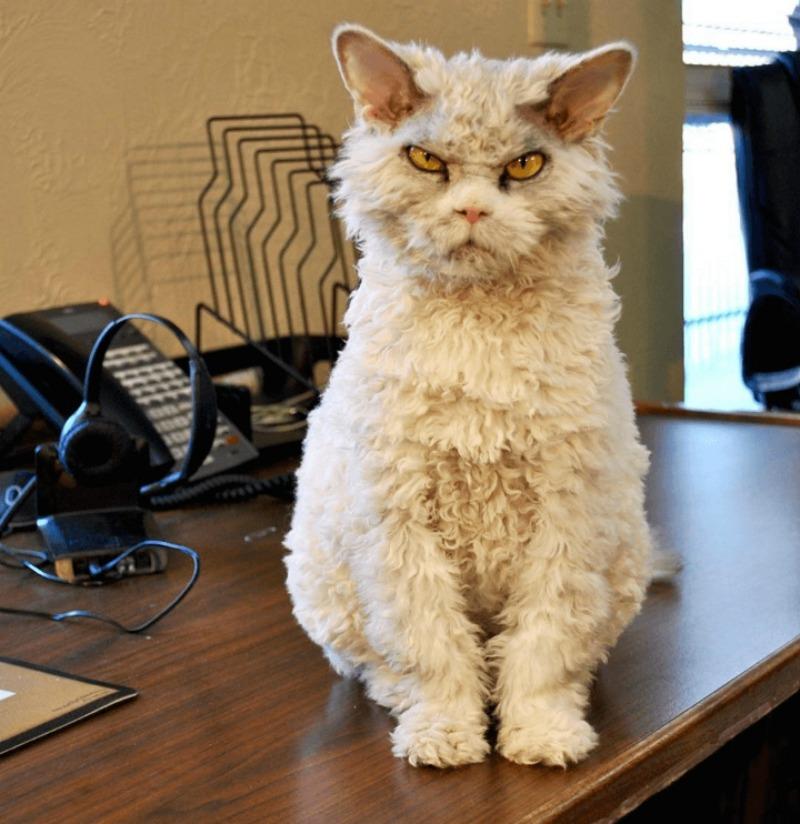 Gato con mirada fiera foto 4