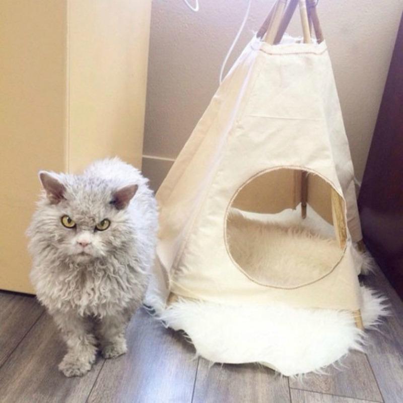 Gato con mirada fiera foto 6