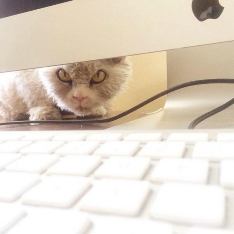 Gato con mirada fiera foto 7