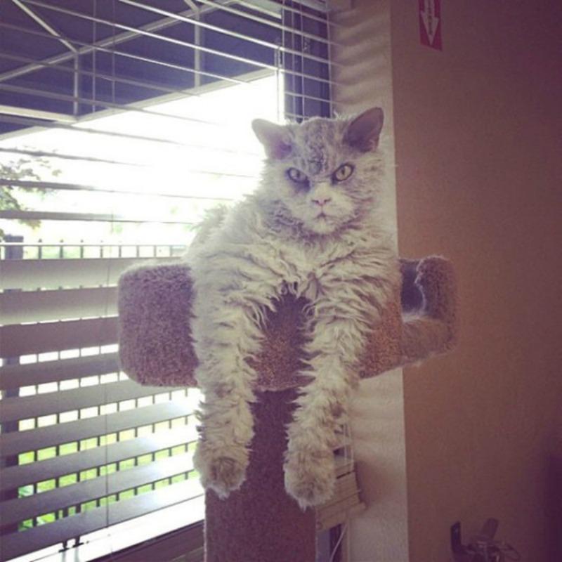 Gato con mirada fiera foto 8