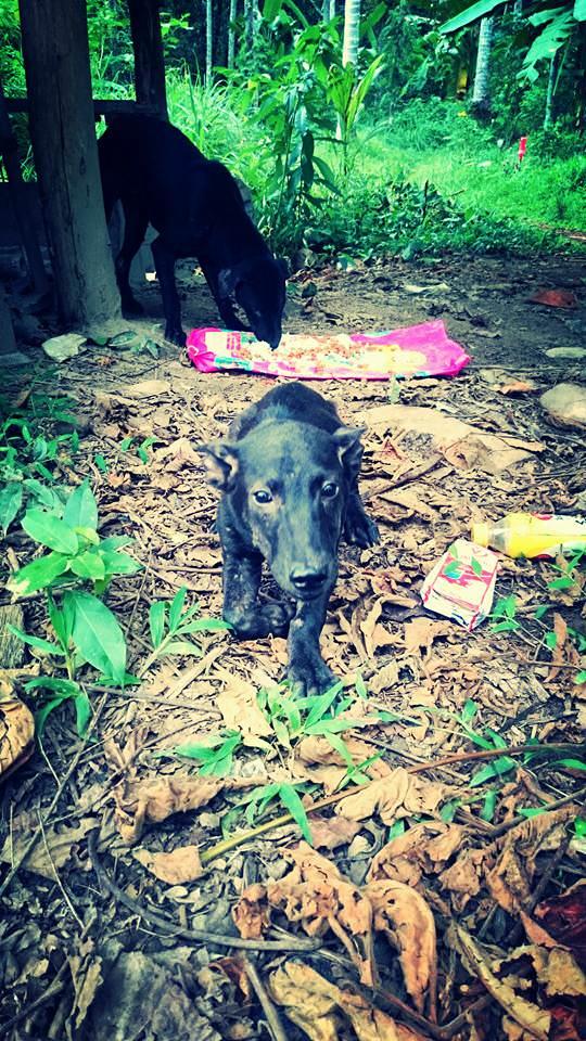 Perro rescatado en Tailandia foto 3