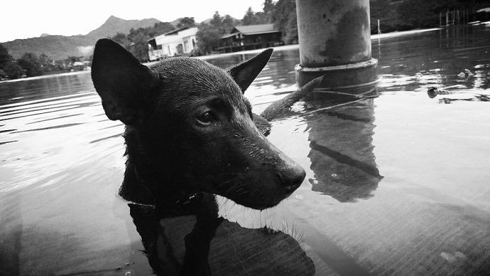 Perro rescatado en Tailandia foto 7