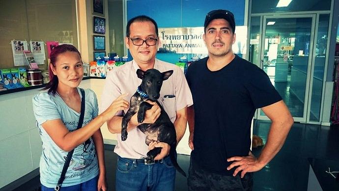 Perro rescatado en Tailandia foto 9