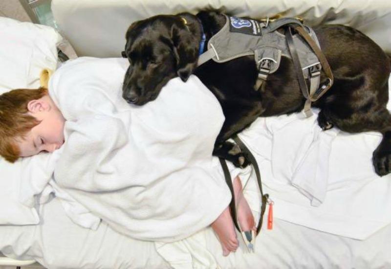 Perro y nino autista foto 2