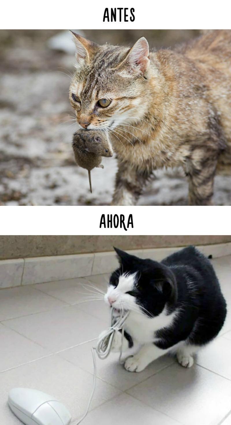 La tecnologia y los gatos 4