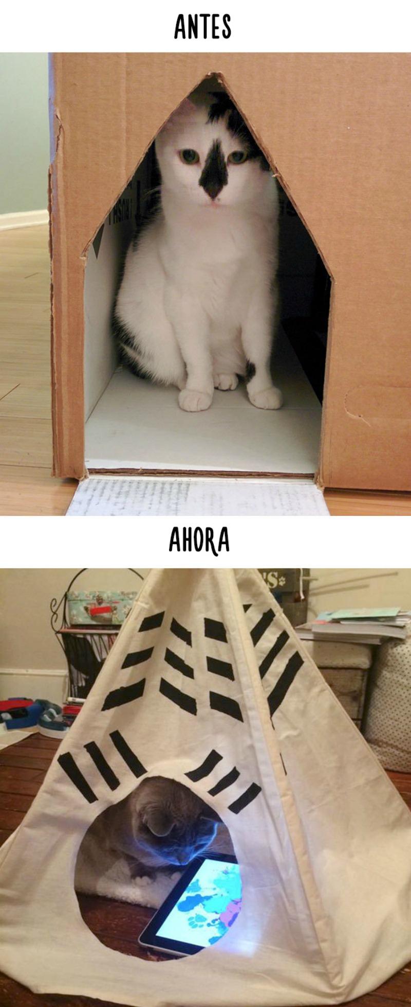 La tecnologia y los gatos 7