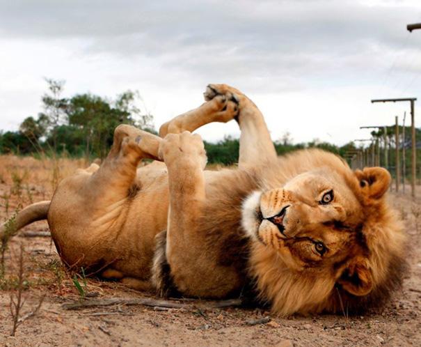 Animales yoga 13