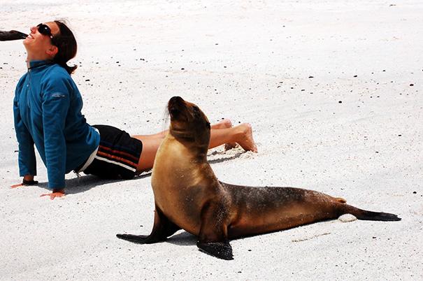 Animales yoga 15