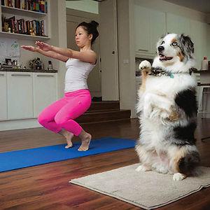 Animales yoga 17