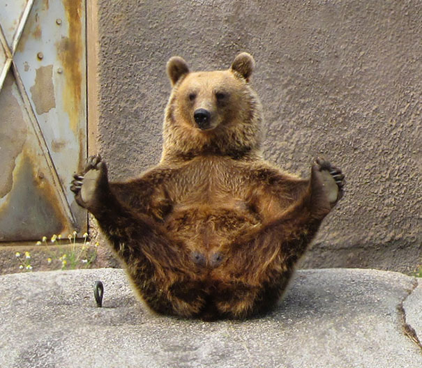 Animales yoga 7