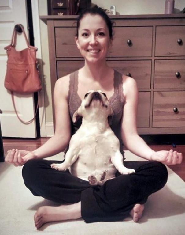 Animales yoga 8